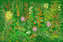wild-plants