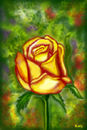 yellow-rose