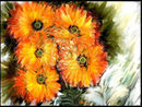 five-calendulas