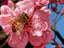 bee-and-pink-flower