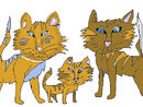 cats-family