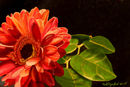 bright-orange-flower